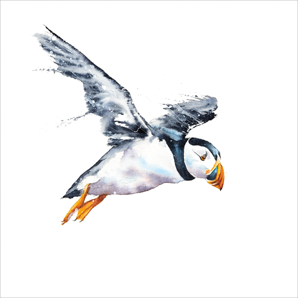 Greeting Card -Puffin- Blank