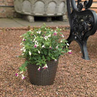 Rattan Effect Plant Pot Small