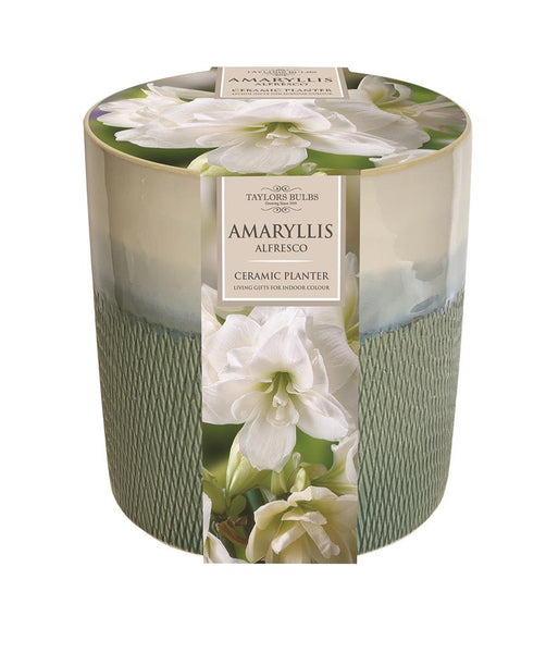 Amaryllis Alfresco Ceramic Planter