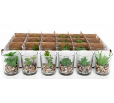 5.5X6.5CM MINI PLANT POT -SINGLE ARTIFICIAL CACTI