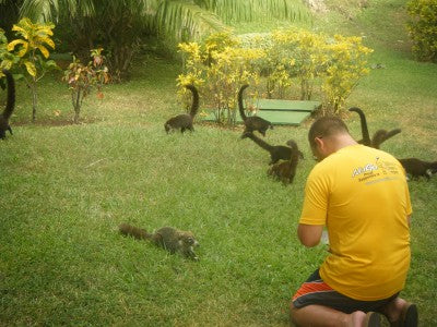CostaRicawithCoatis