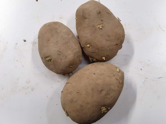 Seed Potatoes - Yukon Gold