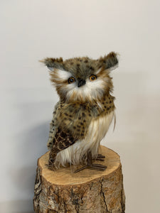 Owl- White Face