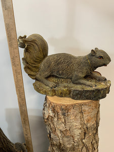 Squirrel- Laying On A Log