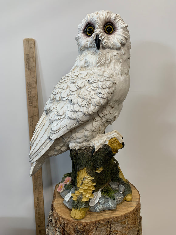 White Owl On A Tree Stump