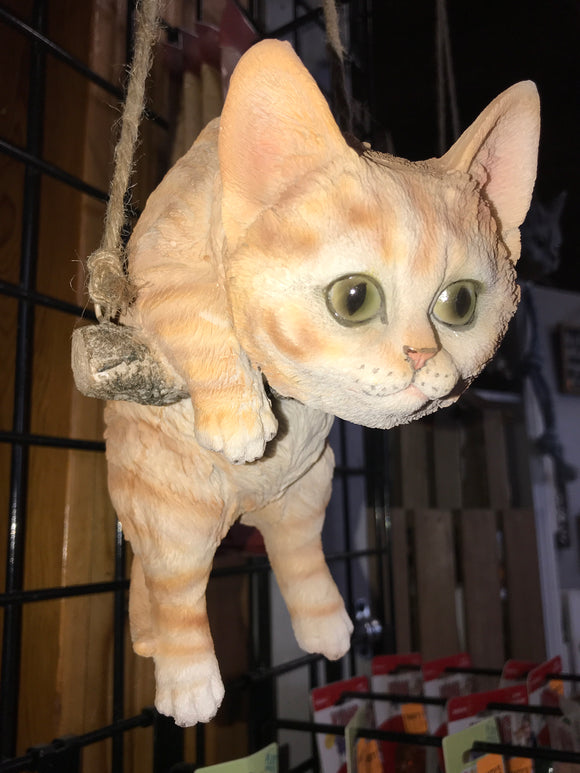 Orange tabby cat hanging