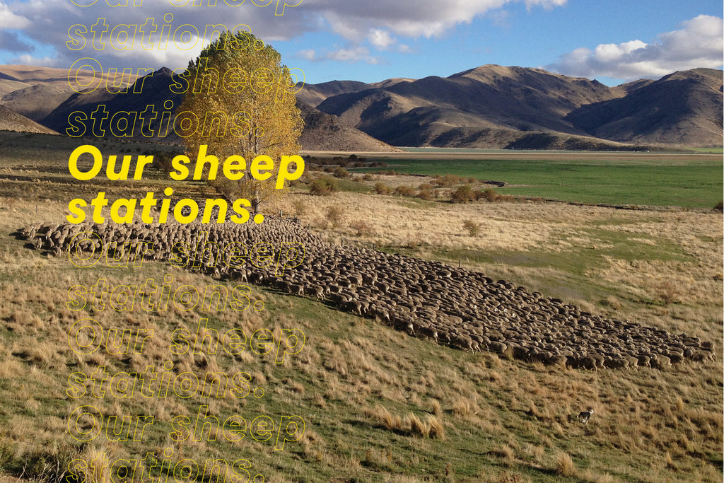 Our sheep stations.