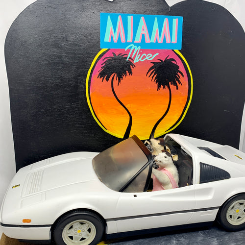 Miami Mice Taxidermy
