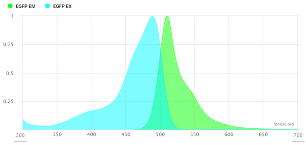 Example excitation-emission spectrum of EGFP, from FBbase.org