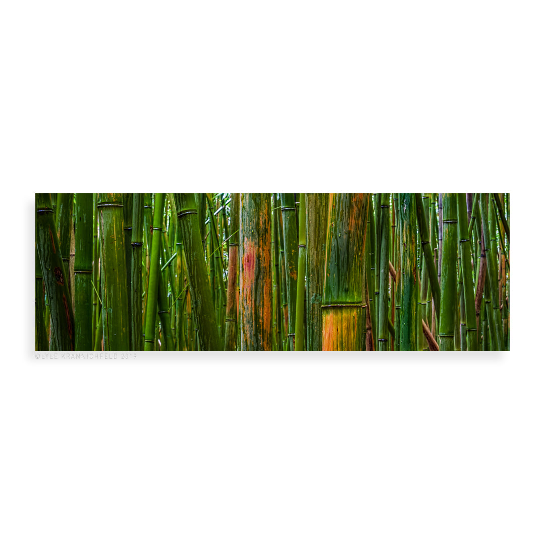 Bamboo - Pueo Gallery