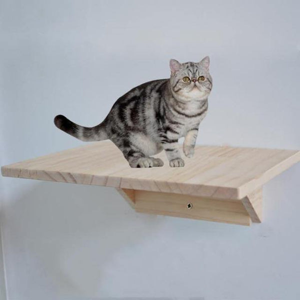 Wall Mounted Cat Jumping Platform DIY | The Pet Talk