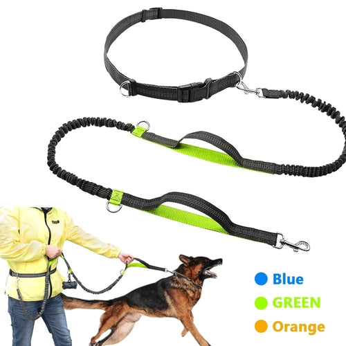 Bungee Dog Leash - MacryDog