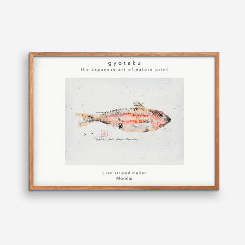 Striped Red Mullet Caught at Bagenkop 02 - MOMLIS