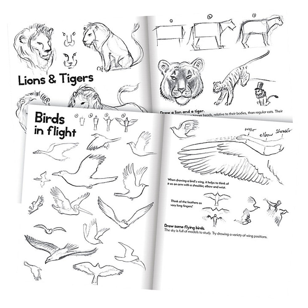 Learn to Draw Animals - Earth Toys - 2
