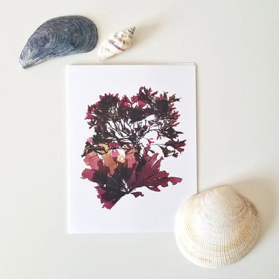 Canadian seaweed print greeting cards