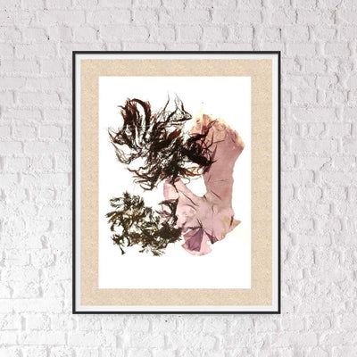 Canadian seaweed prints