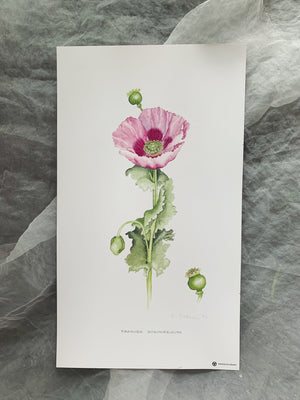 Lyn Noble Botanical Prints