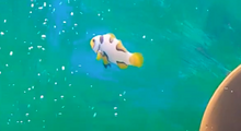 Load image into Gallery viewer, wysiwyg Caged Soul Clownfish