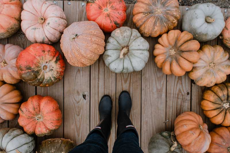 What to do with your pumpkins this Halloween?