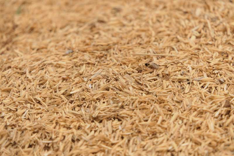 How Recycled Rice Husk Can Help the Planet