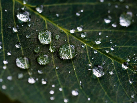 harvesting rain water, green leaf with drops