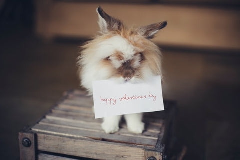 eco friendly valentines day cards with rabbit