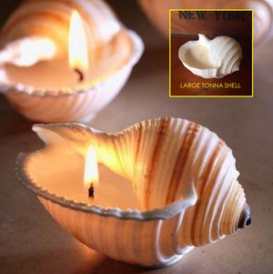 Tonna Shell Candle