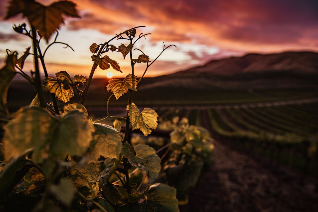 Serbia: Natural Wine's New Frontier