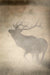 Elk in the Mist 2