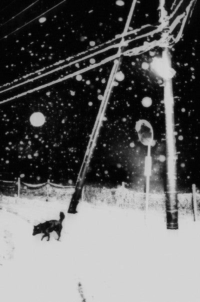 Snowflakes Dog Man (signed) - Photobookstore