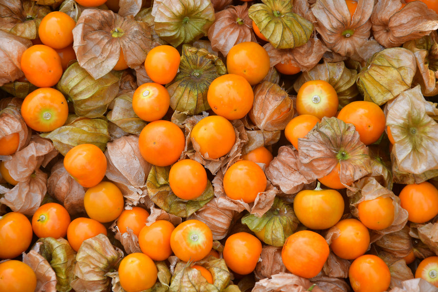 Everything there is to Love about Cape Gooseberries