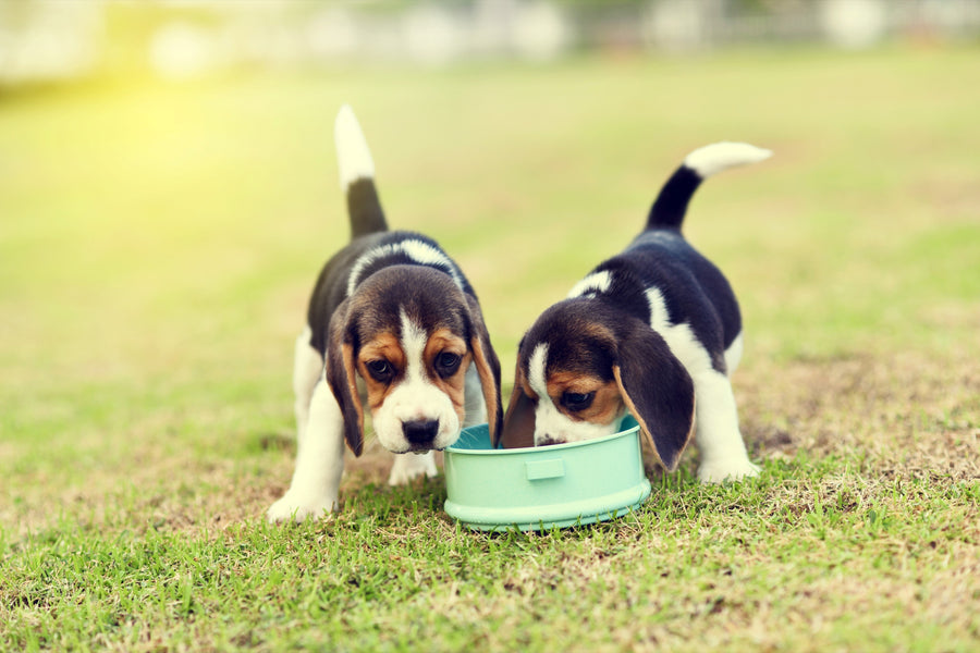 Feeding Your Dog The Right Food