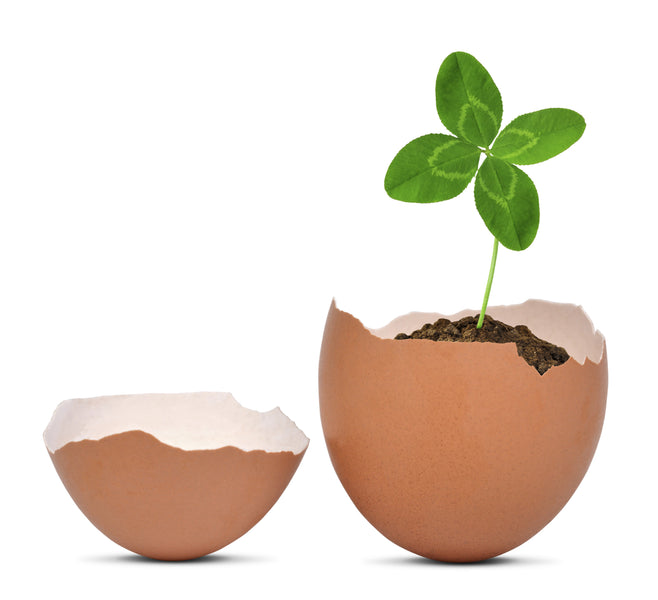 Don't Discard Your Eggshells