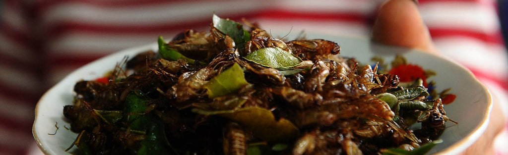 Crickets are a Nutritional Powerhouse