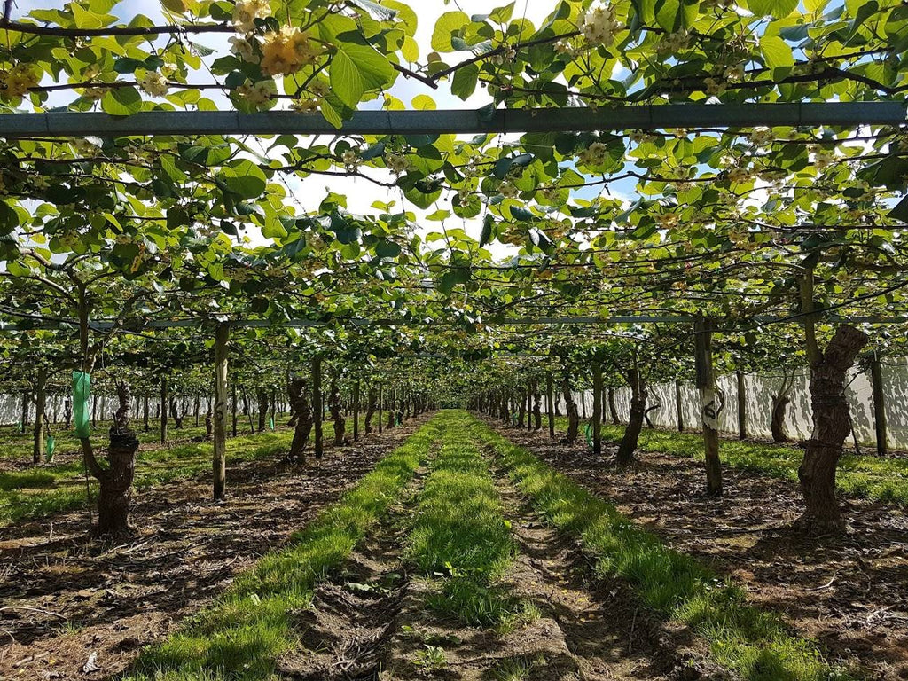 thomas brothers orchard