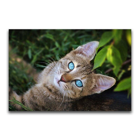 Broderie Diamant Chat Yeux Bleu