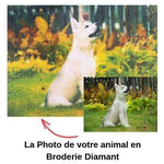 Broderie Diamant Photo - Spécial Animaux