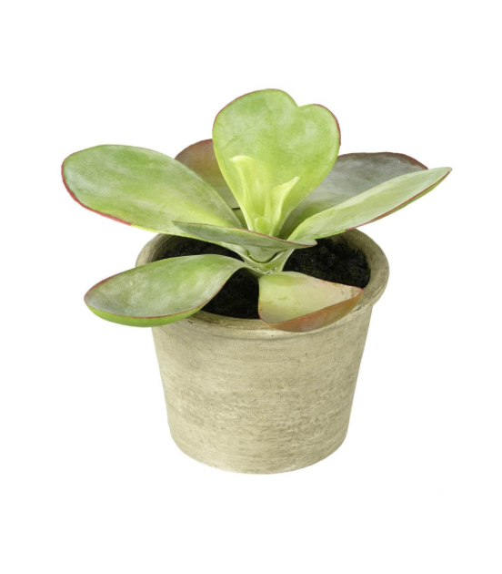 Faux Potted Kalanchoe Plant