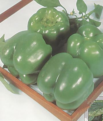 California Wonder Yarden-Organic Green Bell Pepper