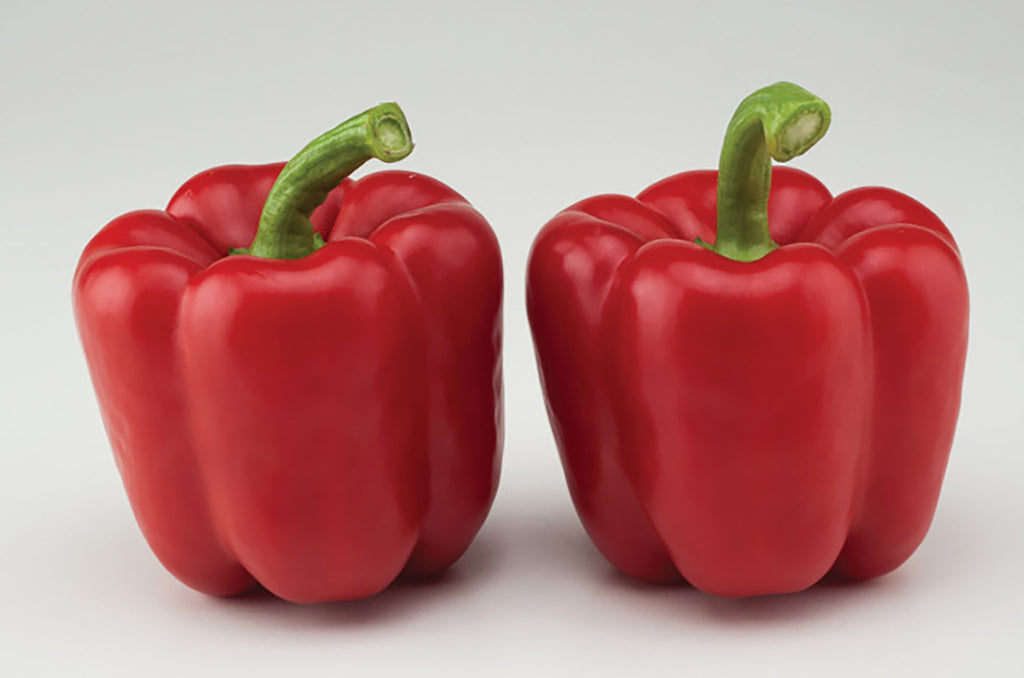 Red Knight Hybrid Bell Pepper