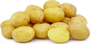 Seed Potato - Heirloom German Butterball - Sold by the Pound
