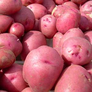 Seed Potato - Red Pontiac - Sold by the Pound