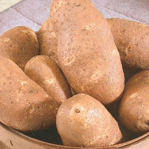 Seed Potato - Gold Rush - Sold by the Pound