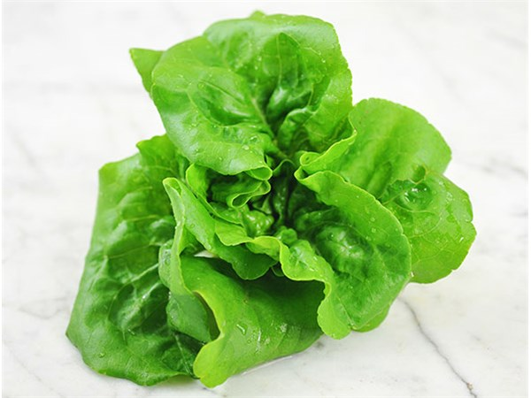 Butterscotch Lettuce 4 Cell Pack