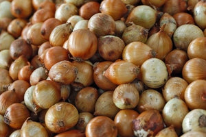 Spanish Onion Sets - Sold by the Pound