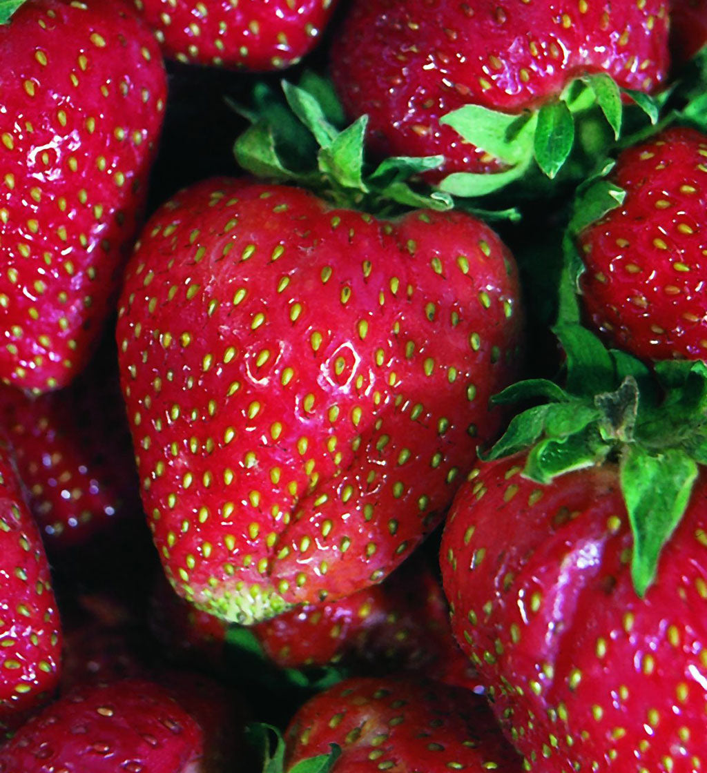 Strawberry Basket Mix  6 Cell Pack
