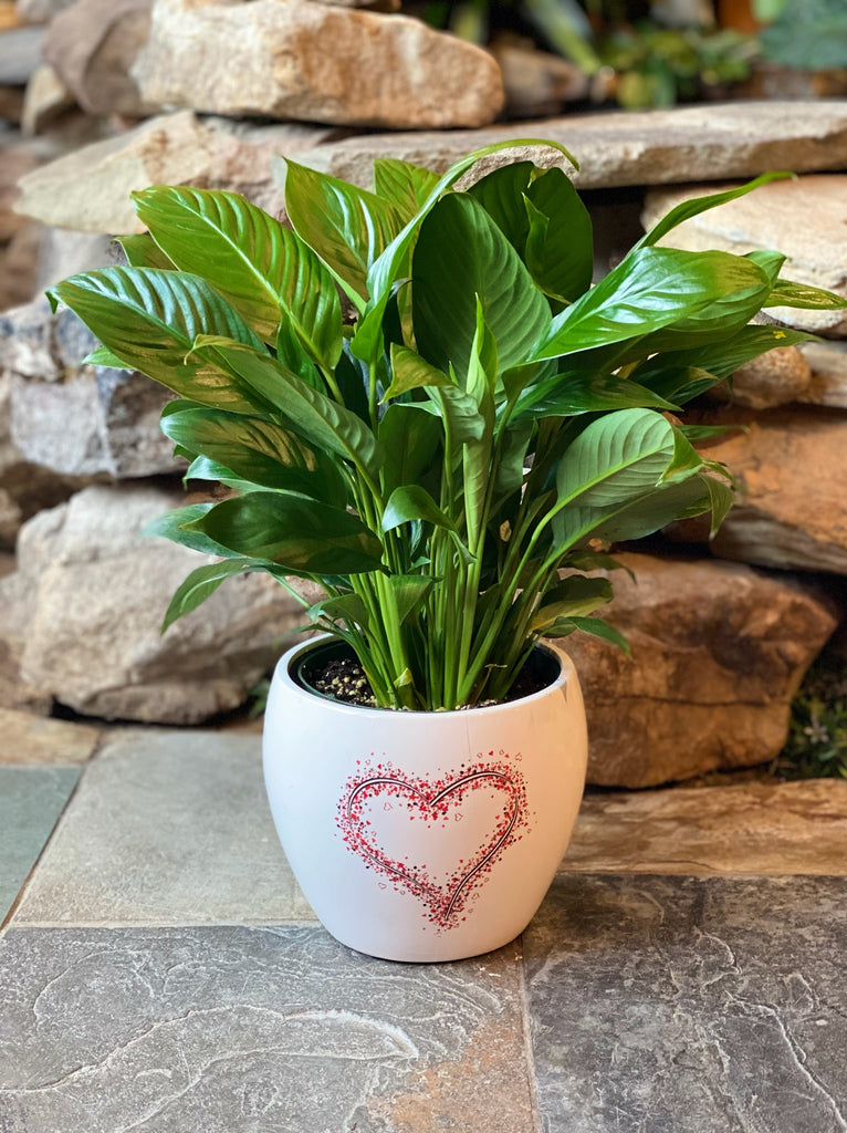 "Peace Lily in 7"" Ceramic Heart Pot"