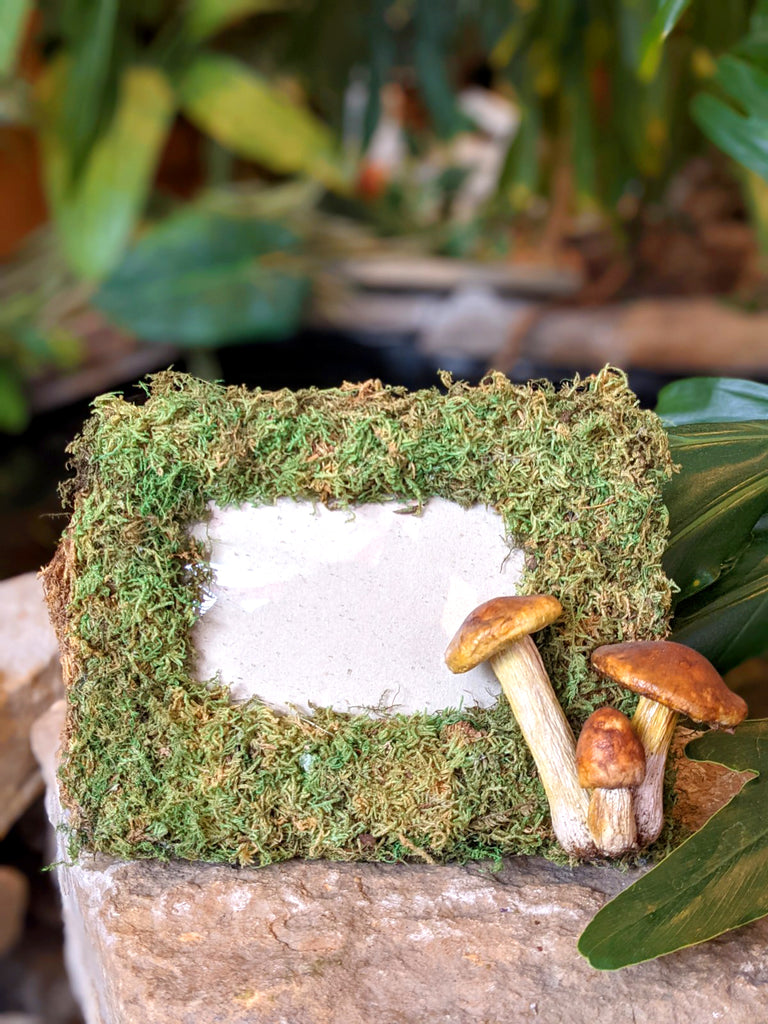 Rectangular Moss Fairy Picture Frame with Toadstools
