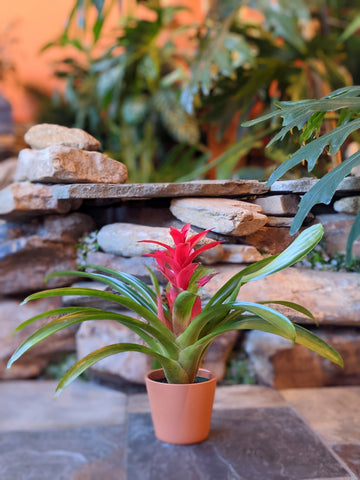 "Bromeliad In 4"" Decorative Pot"