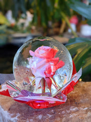 Enchanting Real Rose Globe (4 Colors)